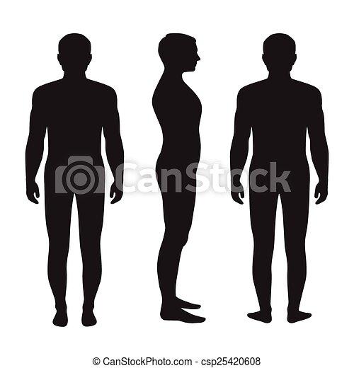 体, 解剖学, 人間 - csp25420608