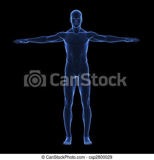 体, x, 人間, 光線 - csp2800029