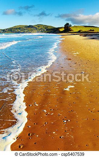 光景, ニュージーランド, 沿岸である - csp5407539