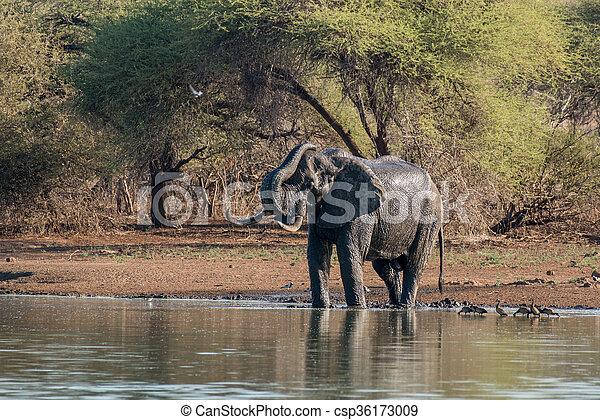 入浴, 象 - csp36173009