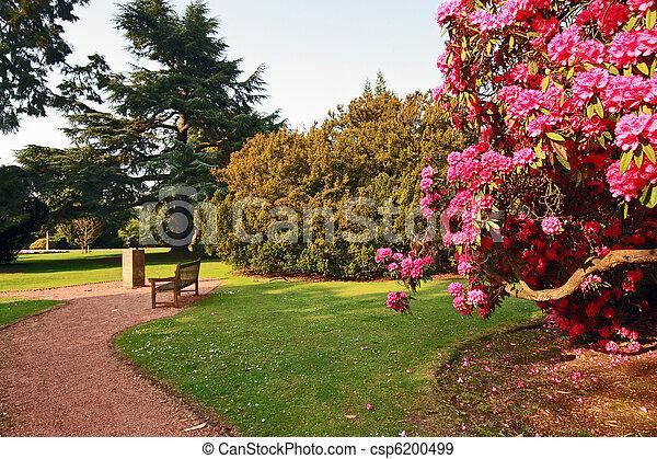 公園, アザレア, 古い, 美しい, 木 - csp6200499