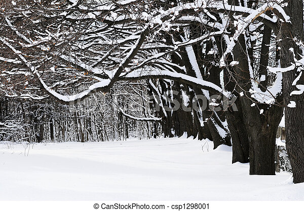 公園, 冬 - csp1298001