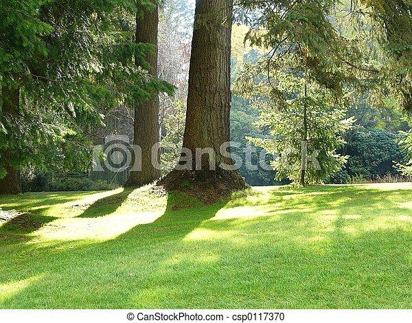公園, 木 - csp0117370