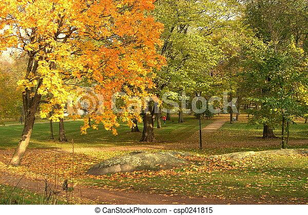 公園, 秋 - csp0241815