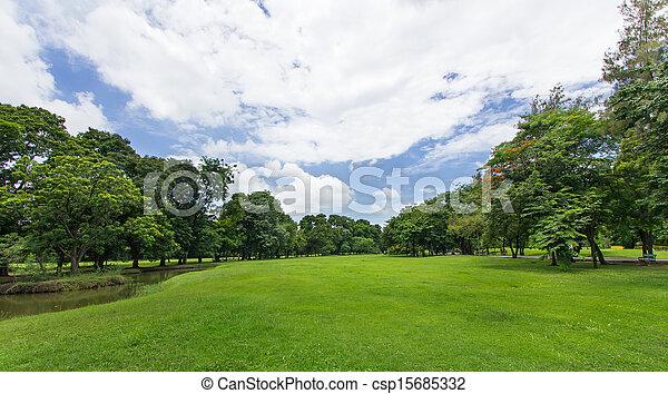 公衆, 青い空, 木, 公園, 緑の芝生 - csp15685332