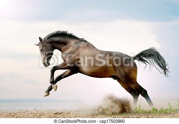 公馬, 戲劇, 海灣 - csp17503960