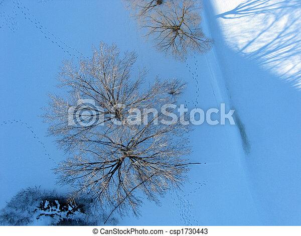 写真, 夕方, 航空写真, 木, 上, つかまえること, light. - csp1730443
