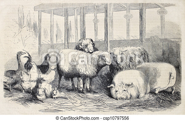 农场动物, bis - csp10797556
