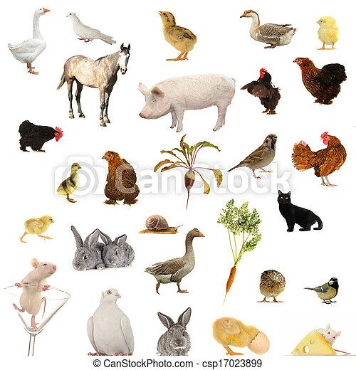 农场, 白的背景, 动物
