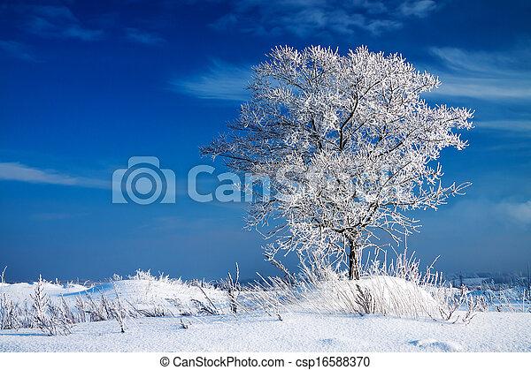 冬の景色 - csp16588370