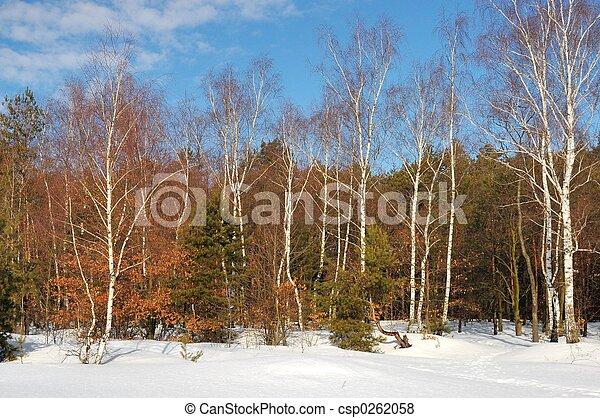 冬天 - csp0262058