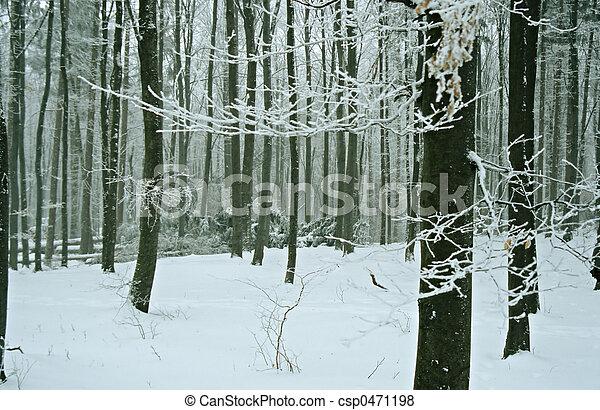 冬天 - csp0471198