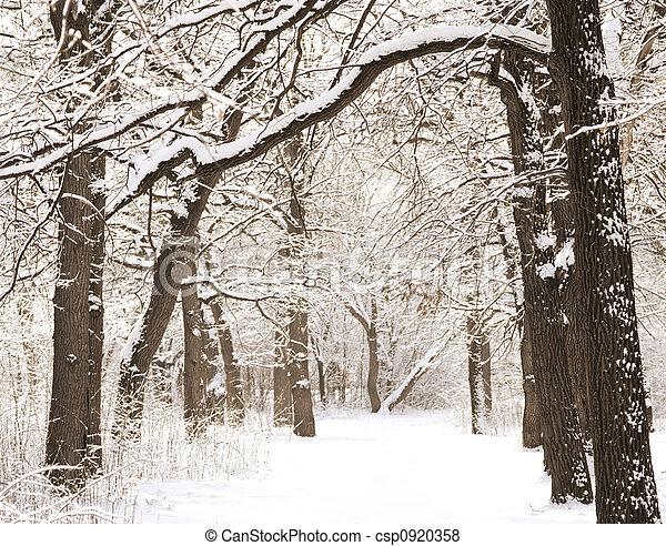 冬天 - csp0920358