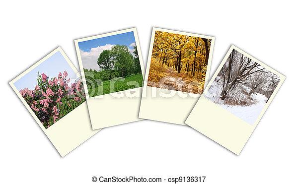 冬, 春, コラージュ, 秋, 木, 4, 写真フレーム, 季節, 夏 - csp9136317