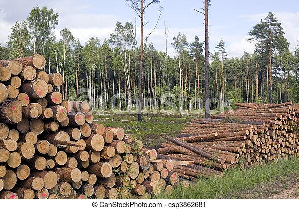 切口, 木, 背景, 自然 - csp3862681