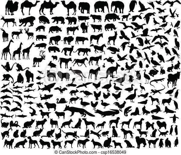 別, 動物, コレクション, 大きい - csp16538049