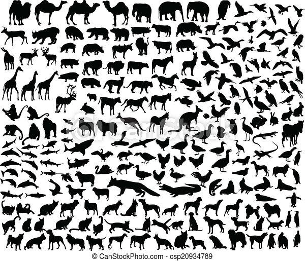 別, 動物, コレクション, 大きい - csp20934789