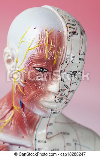 刺鍼術, モデル - csp18280247