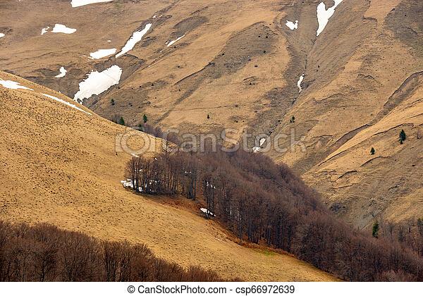 区域, sheep, 木。, 急速, 自然, 集中的, 春, 葉がない, 破壊された, もたらすこと, 山, erosion., 土壌, 早く, 保護される, 牧草, 風景, 山林伐採 - csp66972639