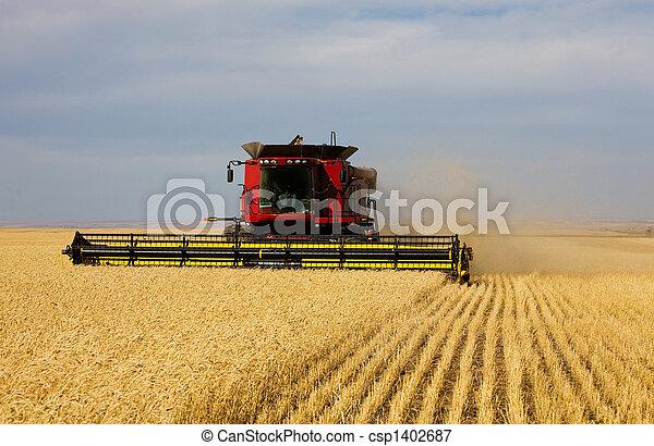 収穫, 秋 - csp1402687