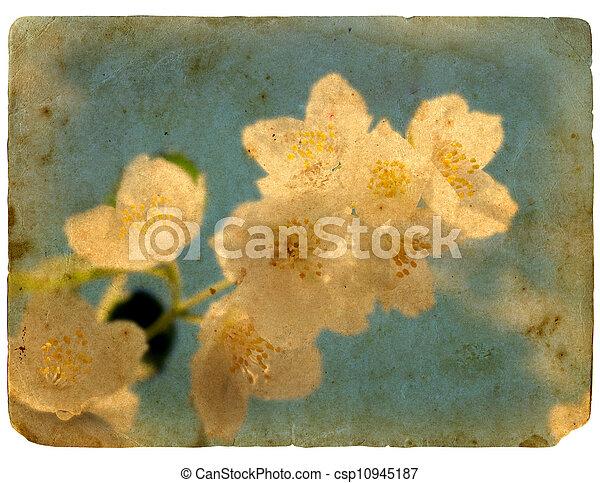 古い, postcard., 咲く, jasmine., 花 - csp10945187