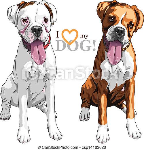 品種, ベクトル, 2, ボクサー, スケッチ, 国内 犬 - csp14183620