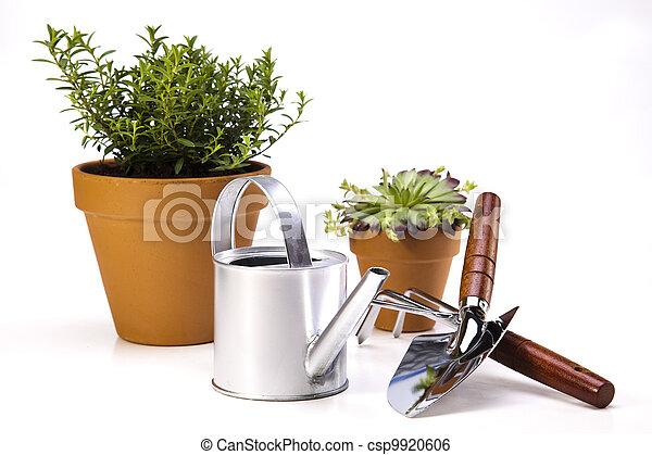噴壺, 花園 - csp9920606