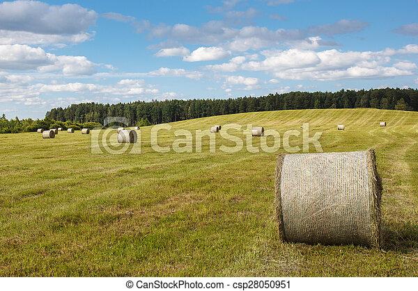 回転した, 小麦, 牧草地, の上 - csp28050951