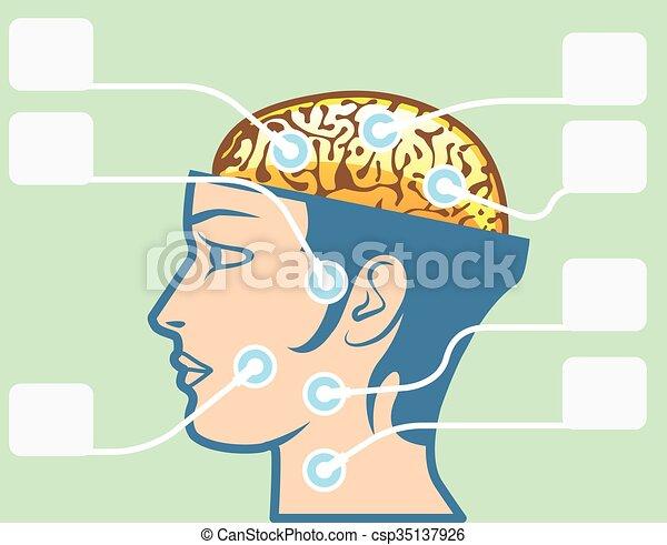 図, 脳, 頭, 機能 - csp35137926