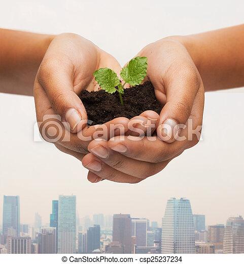 土壌, 植物, 女性の保有物, 手 - csp25237234