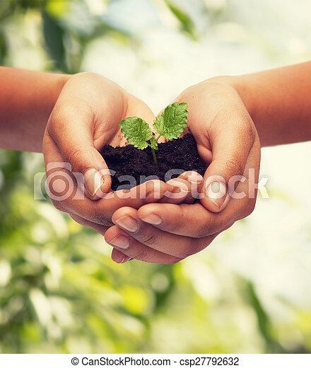 土壌, 植物, 女性の保有物, 手 - csp27792632