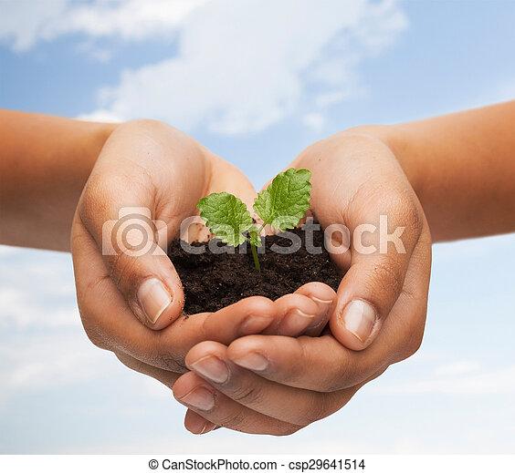 土壌, 植物, 女性の保有物, 手 - csp29641514
