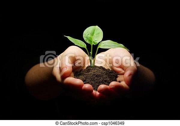 土壌, 苗木, 手を持つ - csp1046349