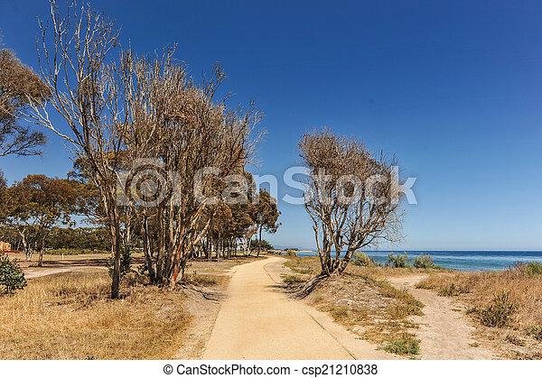 土, 木, 道, 太平洋 - csp21210838