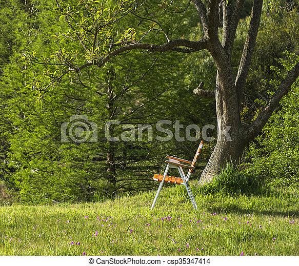 地位, 折りたたみ, ウルグアイ, 春, ceiba の木, maldonado, 下に, 丘, 椅子 - csp35347414