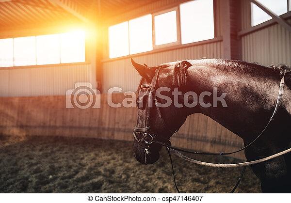 地位, 暗い, 馬, 黒, manege - csp47146407