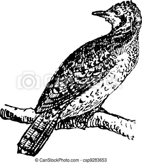 型, wryneck, engraving. - csp9283653