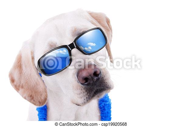 夏季休暇, 犬 - csp19920568
