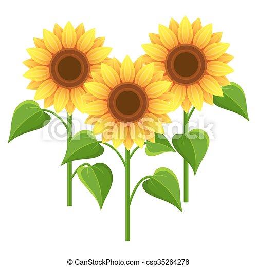 夏 上に 花 ひまわり 白 美しい 夏 Wallpaper Elements 自然 3 黄色 隔離された 定型 バックグラウンド ベクトル デザイン イラスト 背景 花 流行 白い花