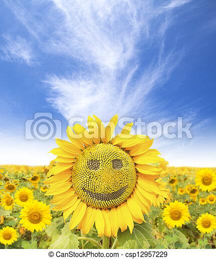 夏, 微笑, 時間, ひまわり, 顔 - csp12957229