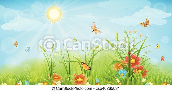 夏, 牧草地, 背景 - csp46265031