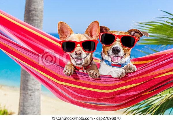 夏, 犬, ハンモック - csp27896870