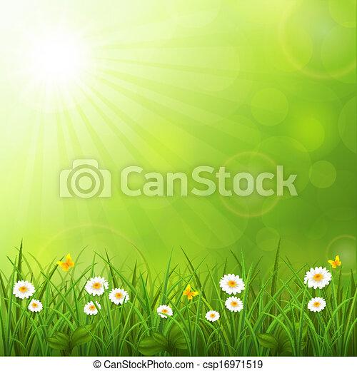 夏, 草, 背景 - csp16971519