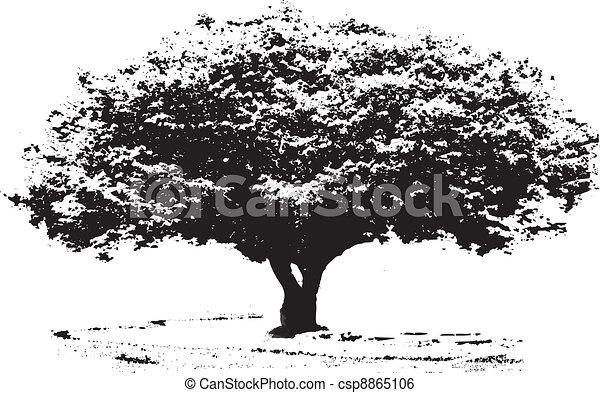 大きい木 白黒