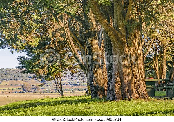 大きい, 田舎, maldonado, 木, ウルグアイ - csp50985764
