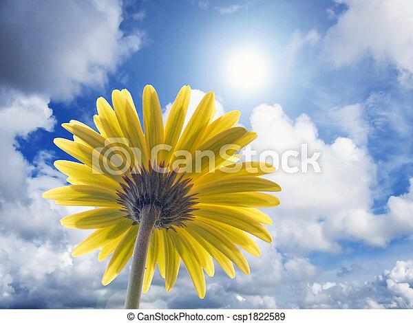 太陽エネルギー - csp1822589