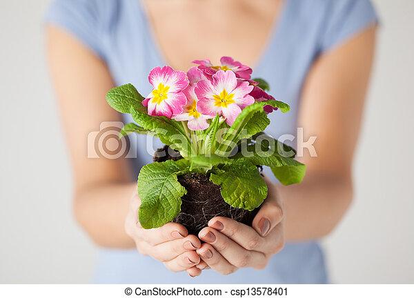 女性, 土壌, 花, 手を持つ - csp13578401