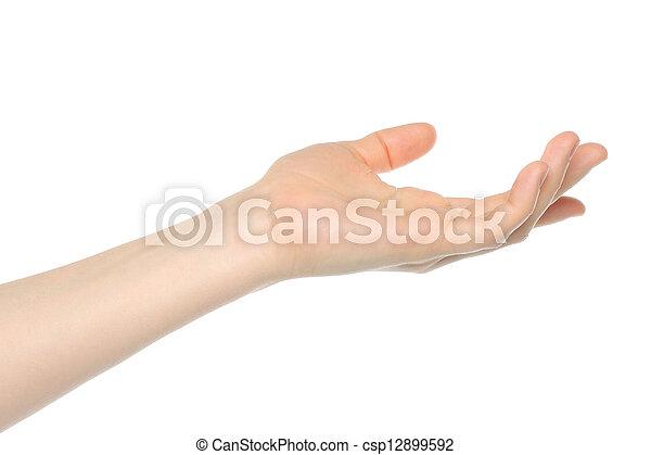 女, 手, 背景, 白, 開いた - csp12899592