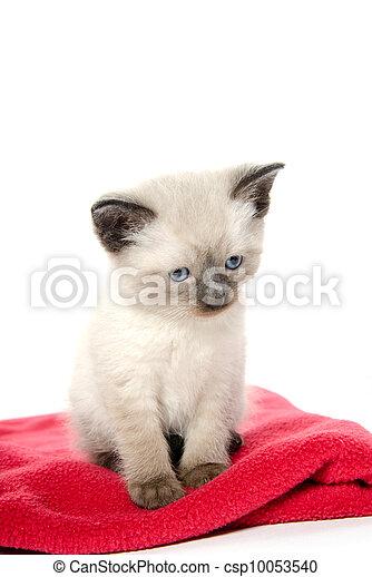 壁纸 动物 狗 狗狗 猫 猫咪 小猫 桌面 301_470 竖版 竖屏 手机