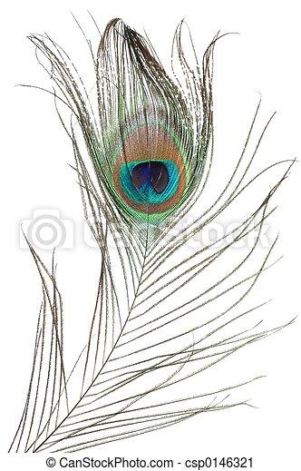 孔雀羽毛 - csp0146321